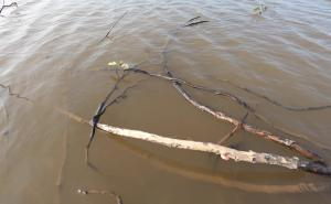 Driftwood on River Surface Footage 1